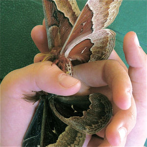 Miss Butterfly…!!!